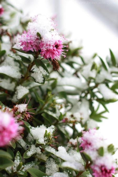 balcon_neige