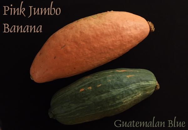 banana_guatemala