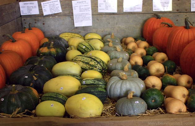 courges2011_8