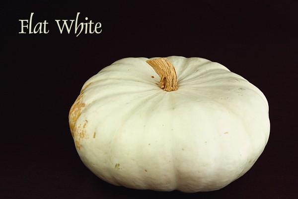flatwhite