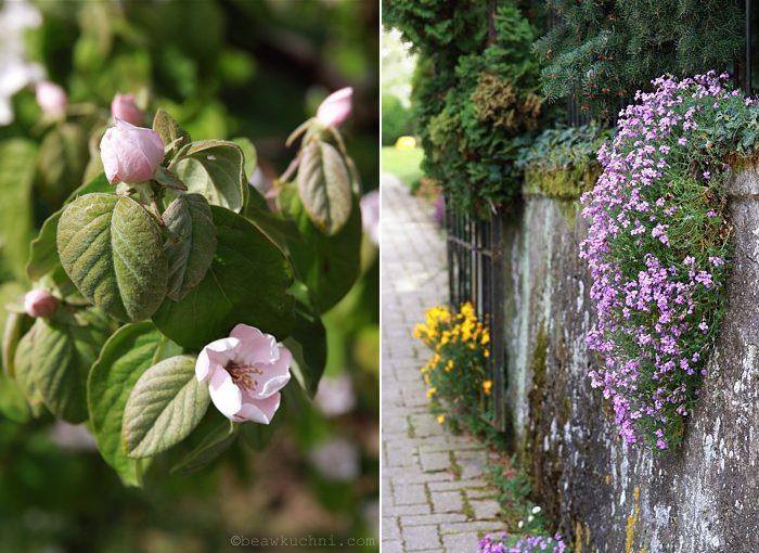 fleurs_mai_double