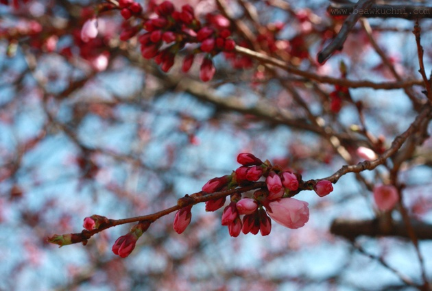 fleurs_mars2012