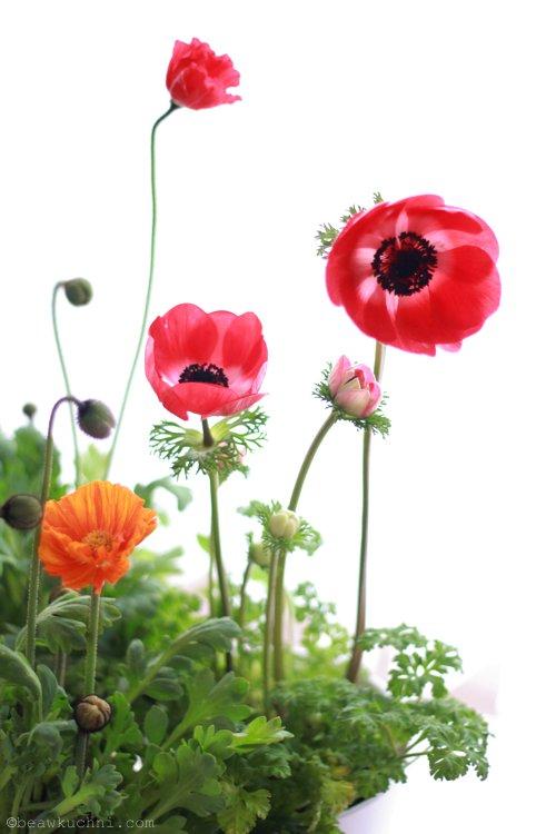 fleurs_paques2