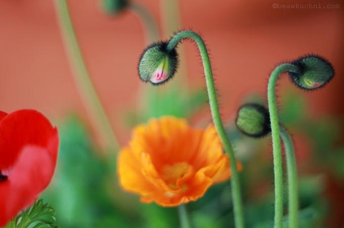 fleurs_paques3
