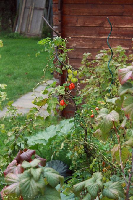 jesien_pomidory