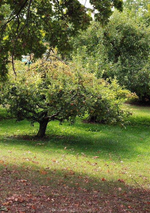 jesien_wrze2012
