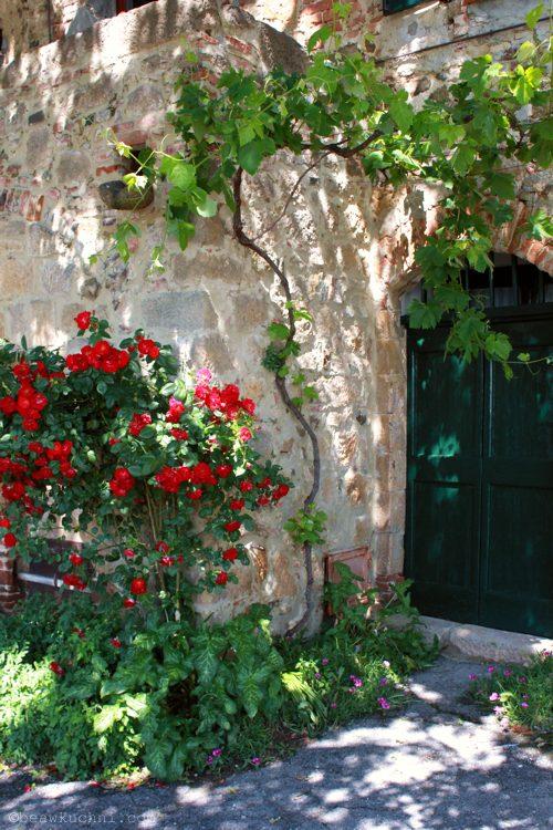 monticchiello_roses