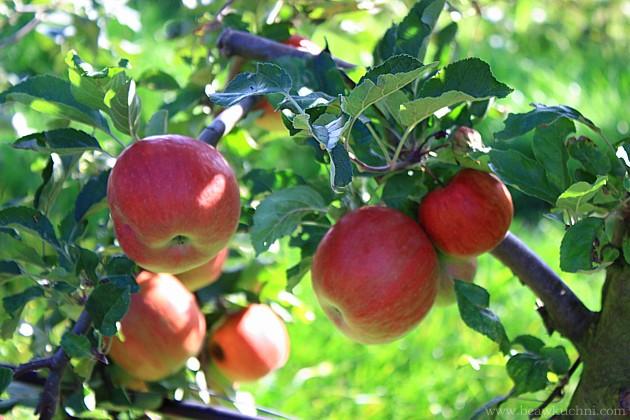 pommesverger