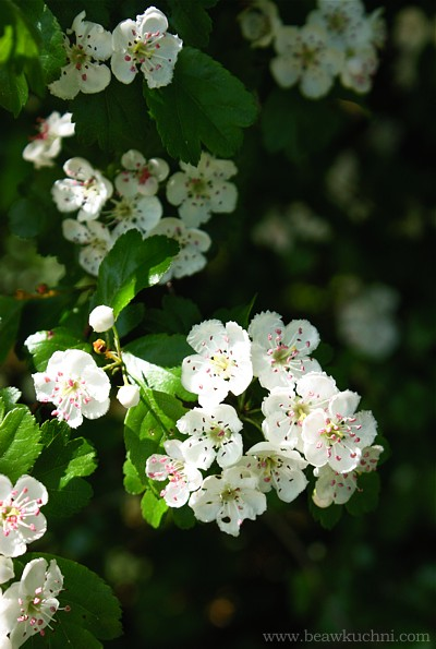 printemps1