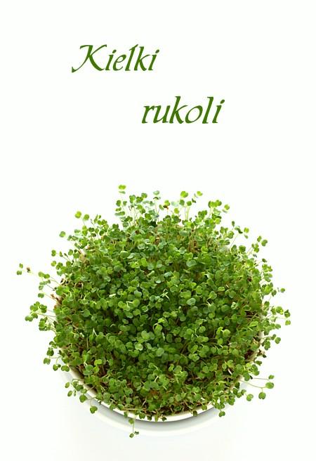 rukola_kielki1