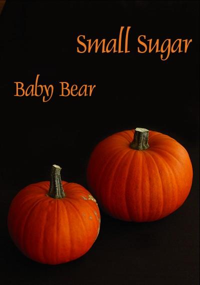 smallsugarbabybear