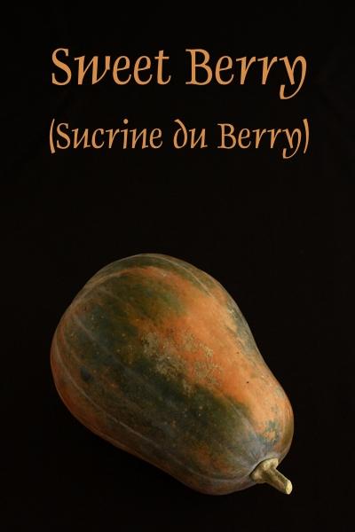 sucrine_berry