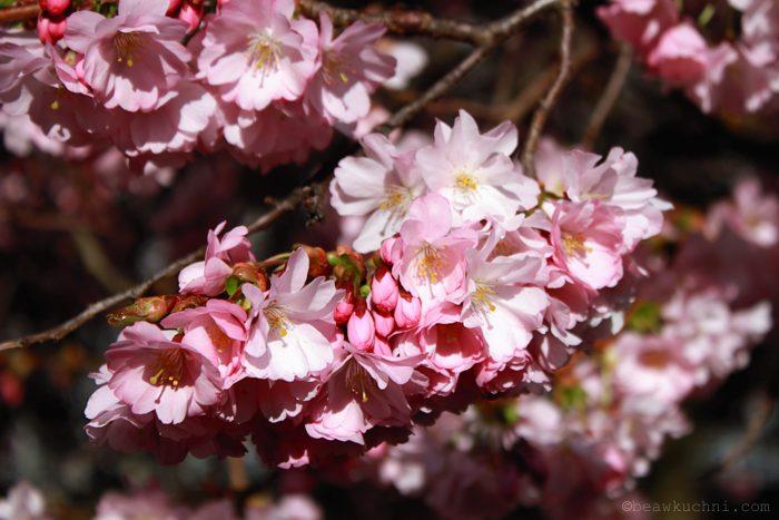 wiosna2014_1
