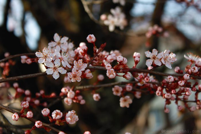 wiosna2014_3