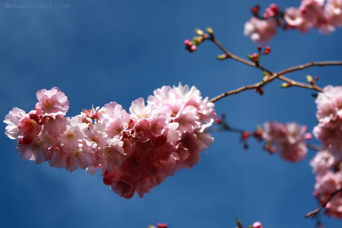 wiosna2014_5